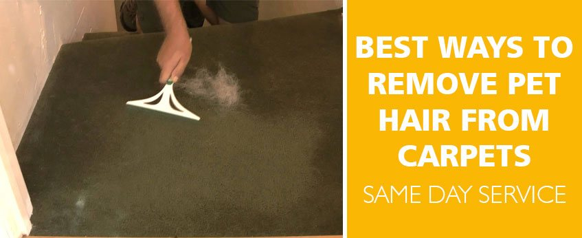 Best Ways to Remove Pet Hair From Carpets