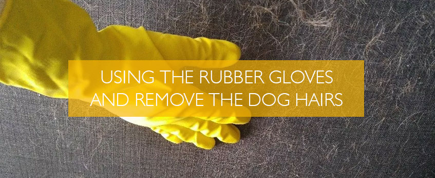 Using the Rubber Gloves and Remove the Dog Hairs in Melbourne
