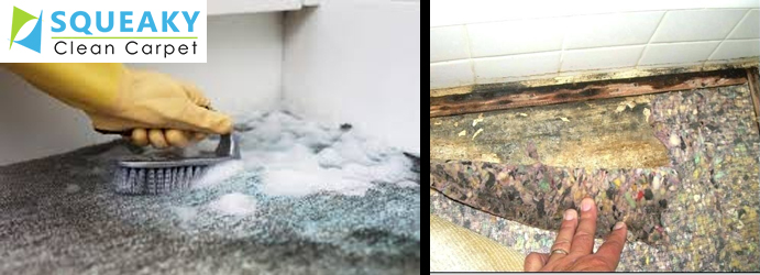 Remove Mould From Carpet