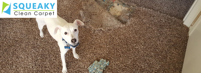 Carpet Pet Damage Repair Sandown Village