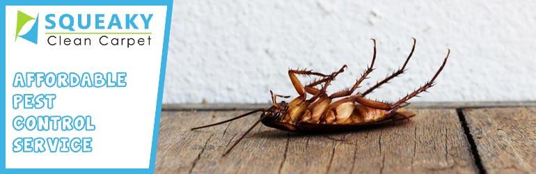 Affordable Pest Control Service Melbourne
