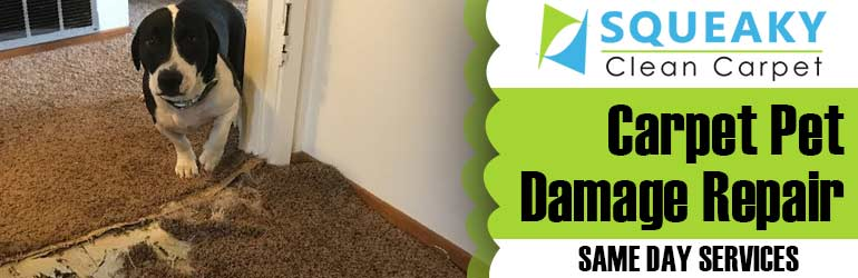 Carpet Pet Damage Repair Hobart