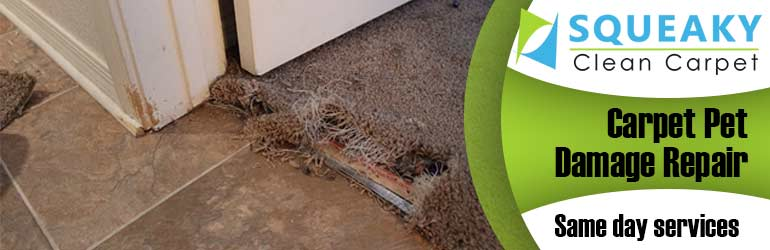 Carpet Pet Damage Repair Armadale