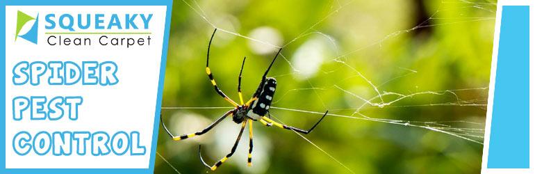 Spider Pest Control Canberra