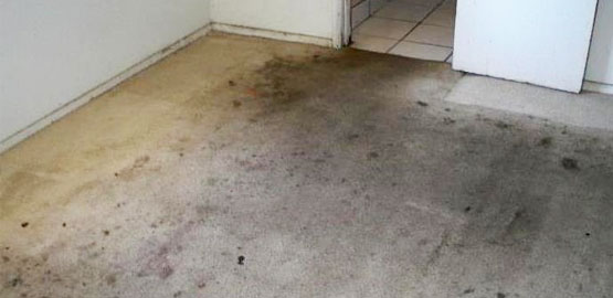 Carpet Mould Removal Edi