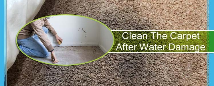 How to Clean The Carpet After Water Damage?