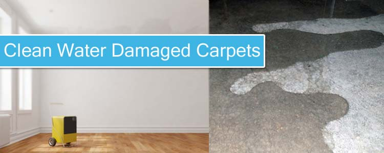 Clean Water Damaged Carpets