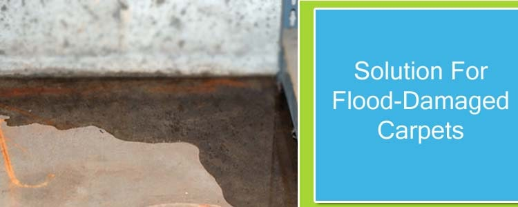 Solution for Flood-Damaged Carpets
