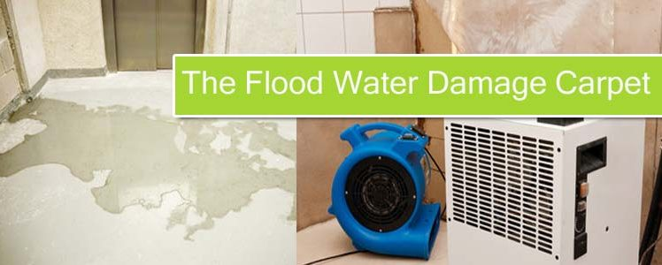 How to Choose The Best Service to Restore The Flood Water Damage Carpet?